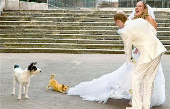 funny wedding 2
