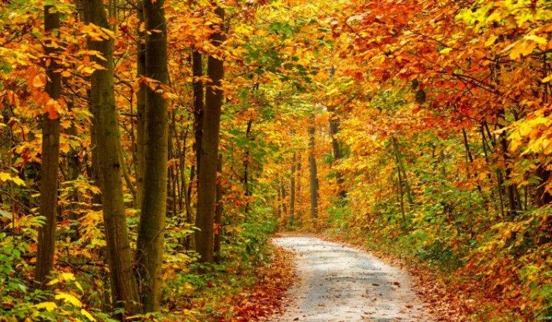 visegrád ősz