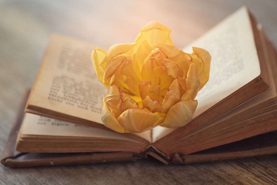 book rózsa