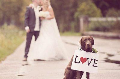 pet-in-wedding-4 (1)