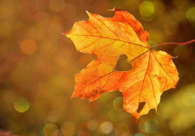 ősz túra